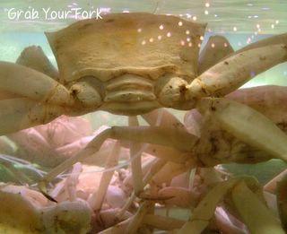 live snow crab