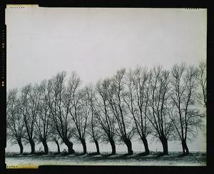 Quelques saules en hiver, Rue de Corsal, Chastre