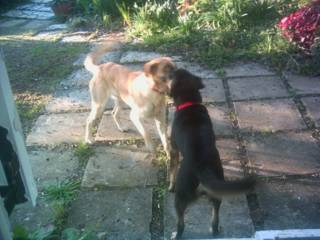 lucy n sam playing