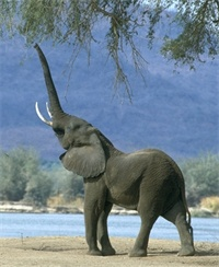 professional elephant trainer