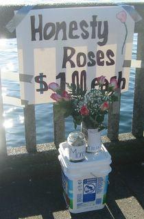 Honesty Roses