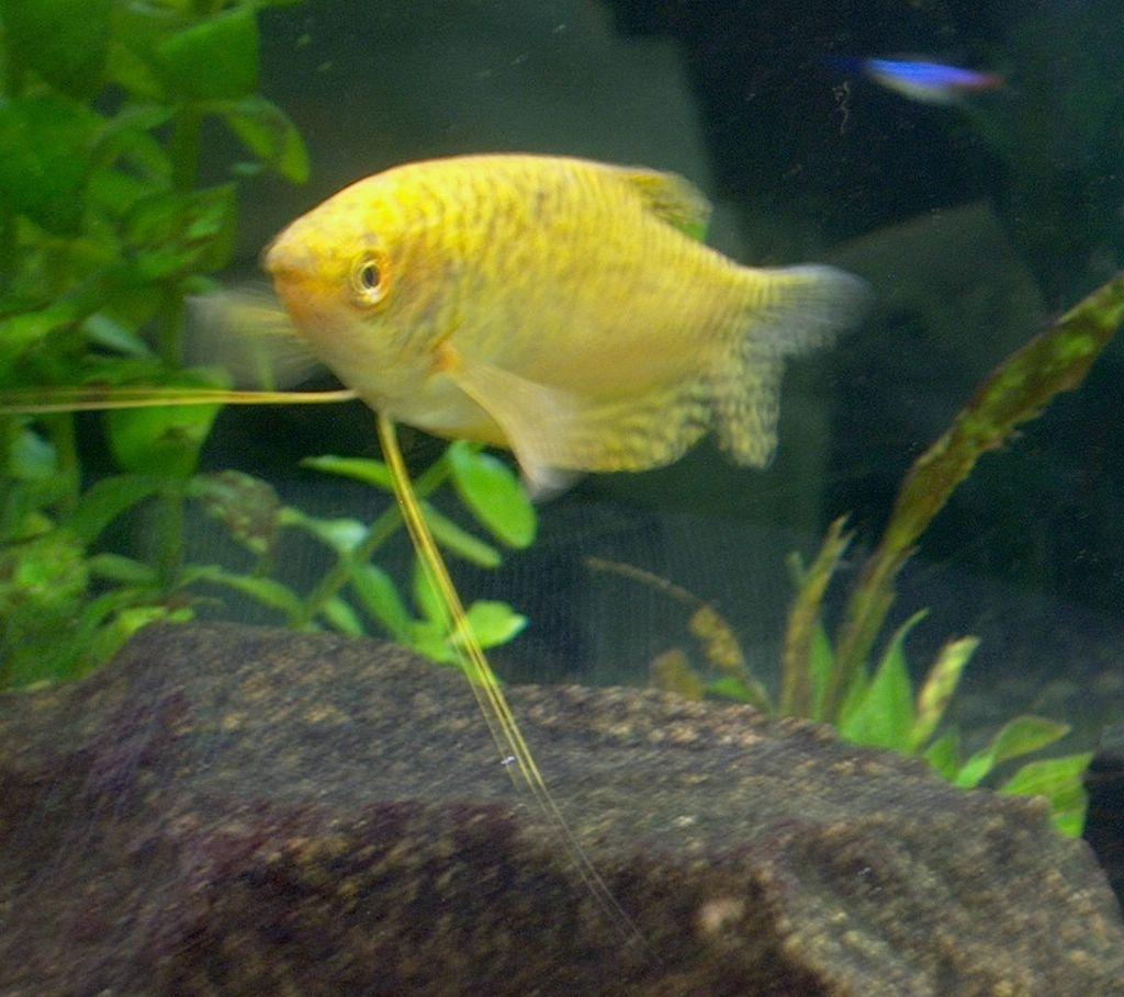 Greg\'s Aquarium