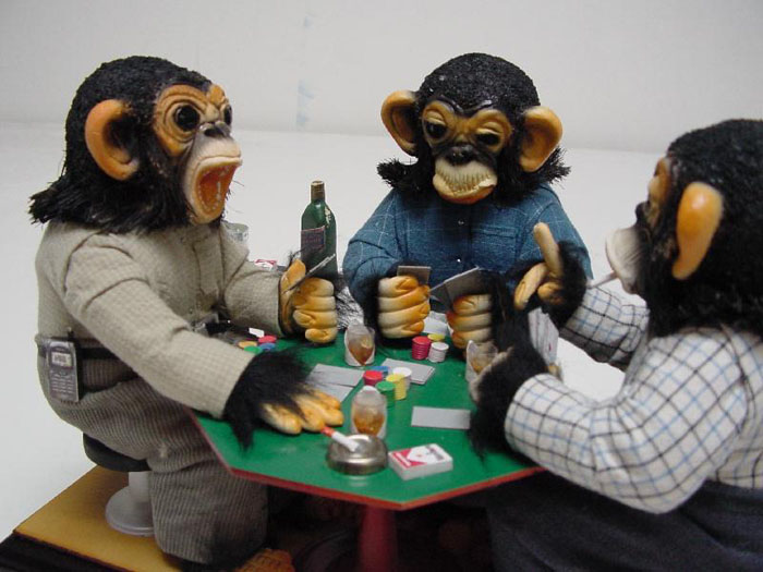 Monkeys gambling