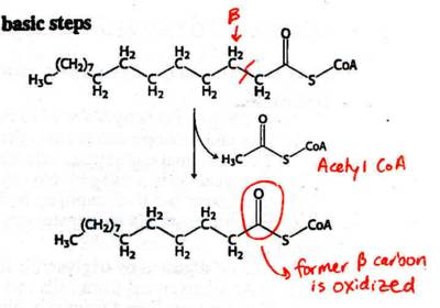 how to find the alpha carbon