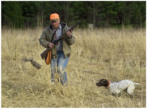 Hunting Dog Training Schools Ohio