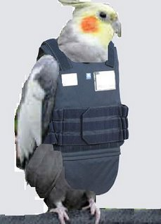Cockatiel with bulletproof vest