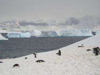 Ice, penguins and sea - the perfect holiday