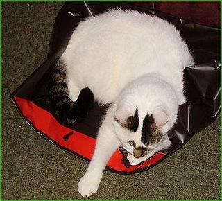 bagged (too much catnip)