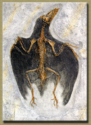 http://fossils.valdosta.edu/fossil_pages/fossils_cre/b2.html