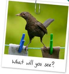 Juvenile Blackbird on Clothes Line (RSPB photo)