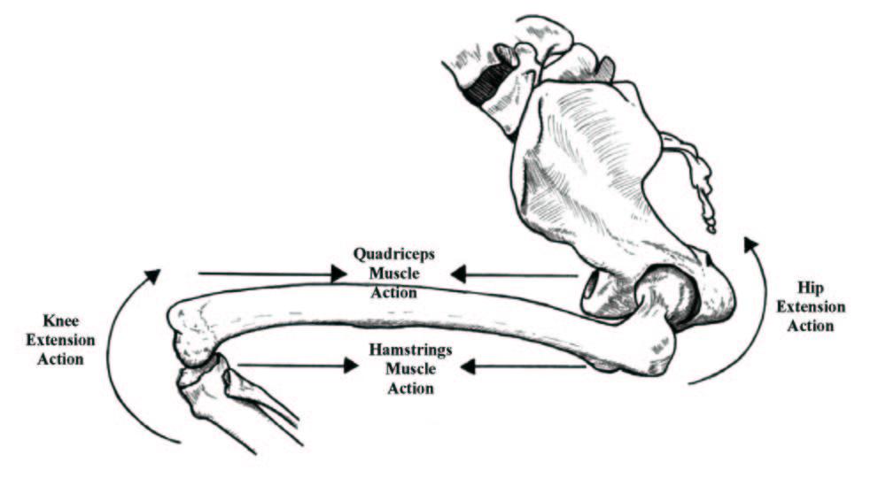 PT23 Tipps: Ein wenig Anatomie