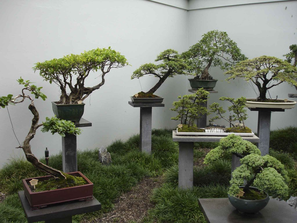 Oriental Bonsai Wiring Styles Trees Showing A Variety Of Different
