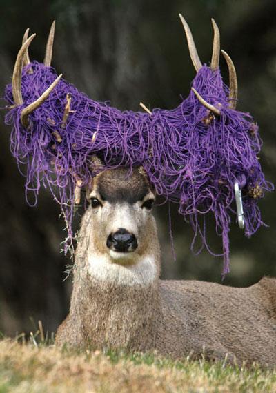 Deer Hair