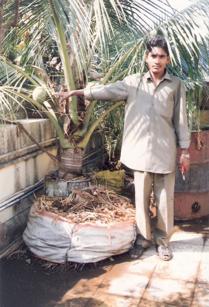 Sharing my thoughts visiting dr r t doshi 39 s terrace farm for Terrace farming in india