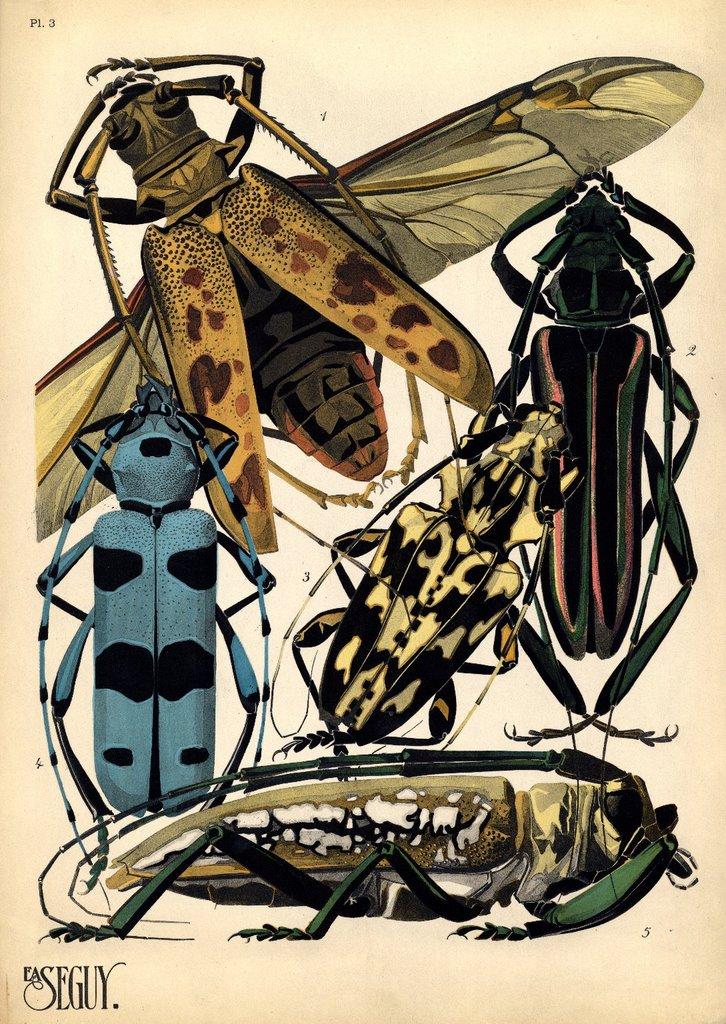 Bibliodyssey pochoir insects for Pochoir deco