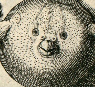 orbis non spinosus