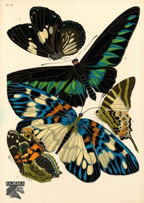 insects: butterflies and beetles