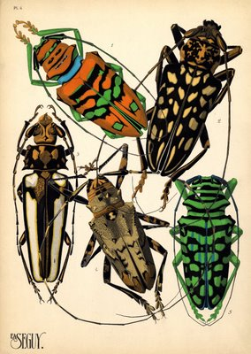 pochoir insect prints