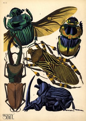 insect prints by E. A. Séguy