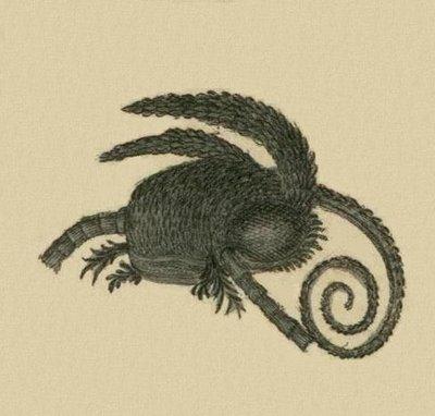 Schaeffer - Abhandlungen von Insecten d