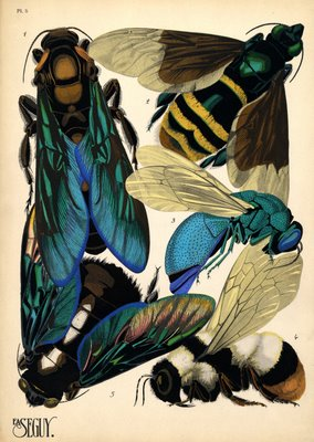 E. A. Sguy butterflies and beetles
