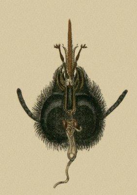 Schaeffer - Abhandlungen von Insecten e
