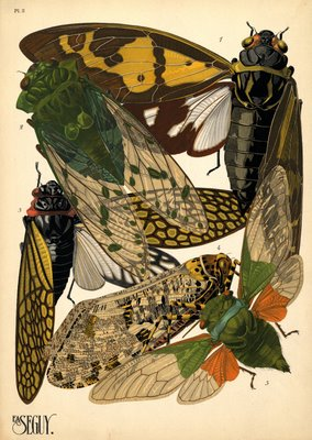 insect pochoir prints by E. A. Séguy