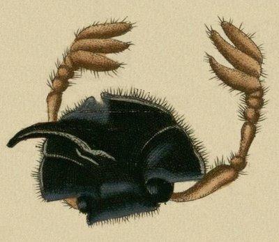 Schaeffer - Abhandlungen von Insecten b
