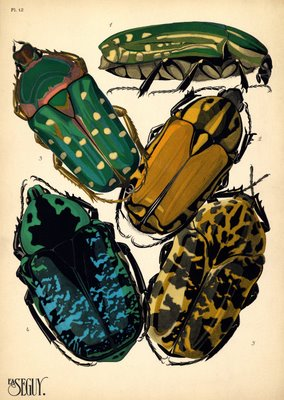 Séguy insects