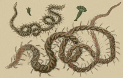 Schaeffer - Abhandlungen von Insecten i