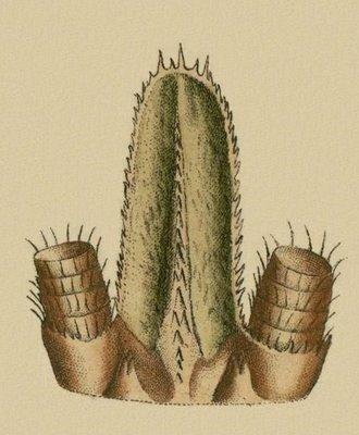 Schaeffer - Abhandlungen von Insecten c