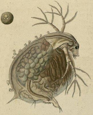 Schaeffer - Abhandlungen von Insecten l