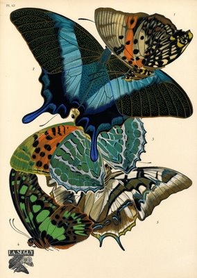 insect prints in art deco style