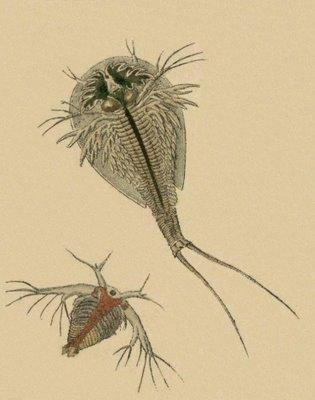 Schaeffer - Abhandlungen von Insecten g