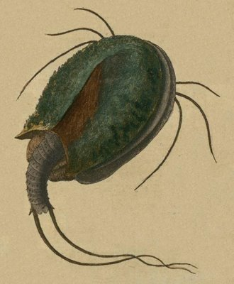 Schaeffer - Abhandlungen von Insecten m