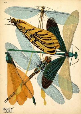 butterflies pochoir seguy