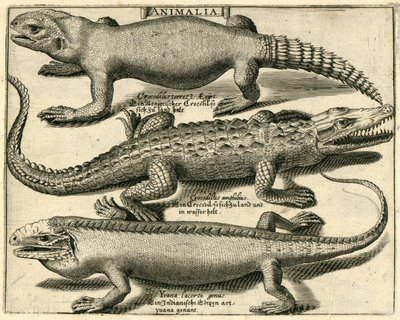 Crocodile and Iguanas