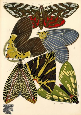 1920s insect print
