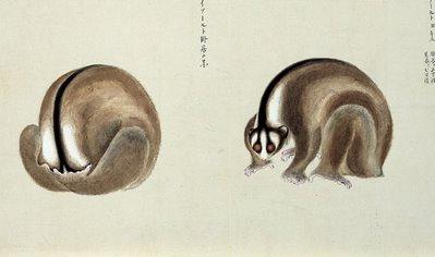 Japanese mammal