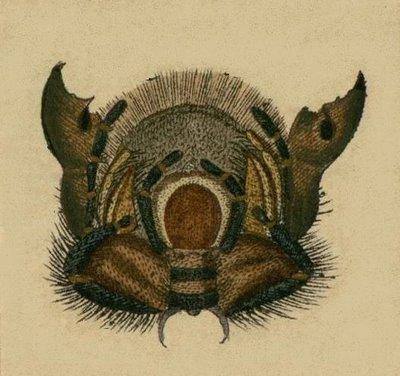 Schaeffer - Abhandlungen von Insecten f