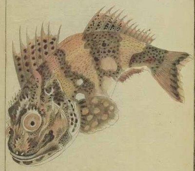 strange fish from rare Japanese book