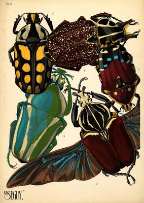 prints of insects art deco
