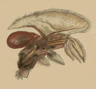 Schaeffer - Abhandlungen von Insecten n