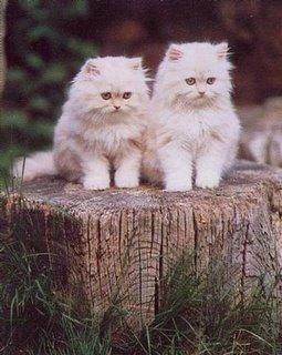 صور القطط الجميلة Untitled