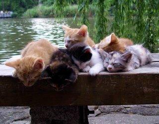 صور القطط الجميلة Park_kittens_01