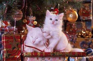 صور القطط الجميلة Christmascats