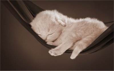 picture of a cat sleeping