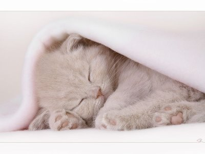 picture of a kitten sleeping