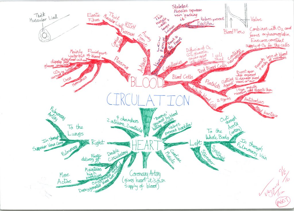 Biology Mind Mapping Memory Gcse Revision Circulatory System