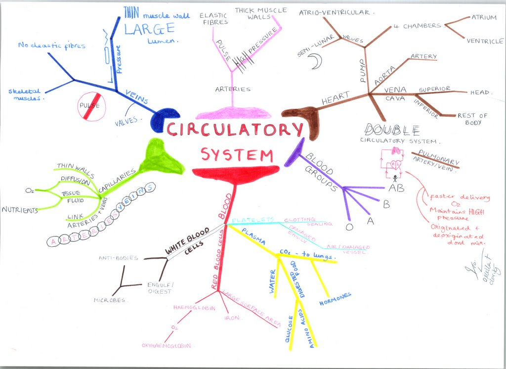 biology mind mapping memory